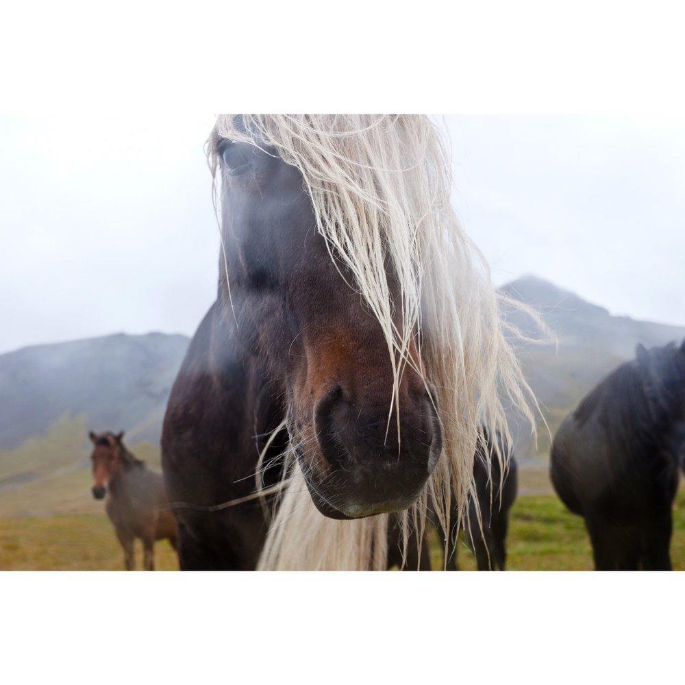 Katrina Jane Perry_Iceland_horse16_2.JPG