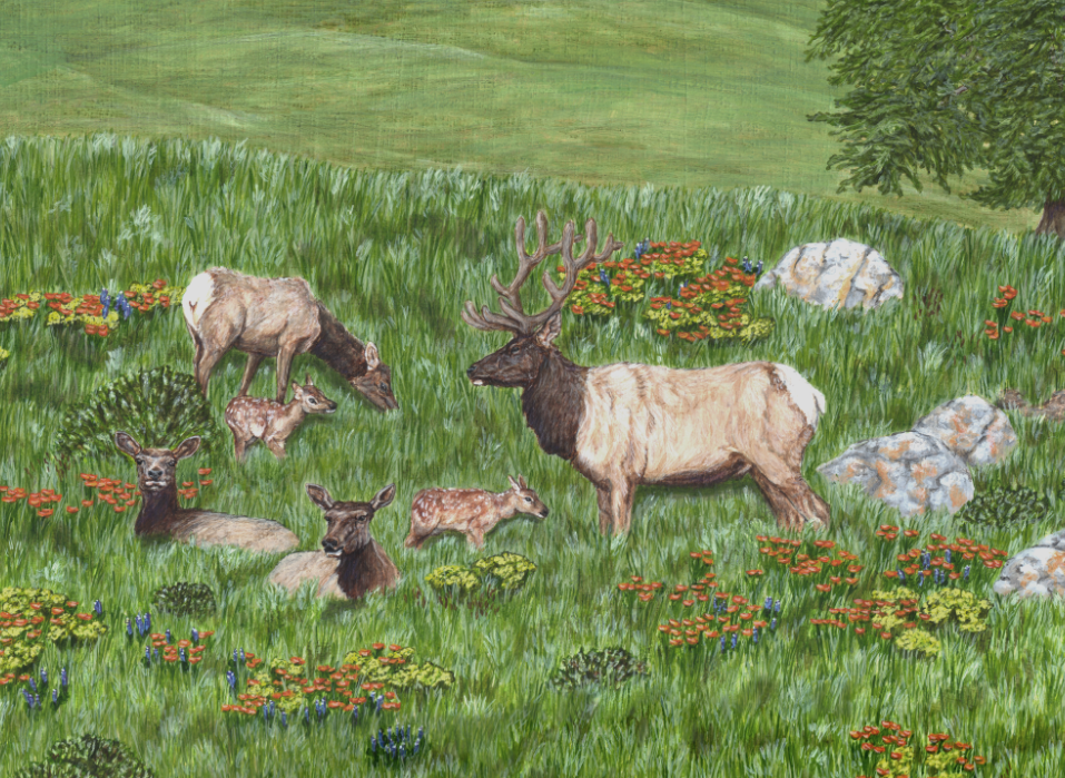 Detail of Tule Elk