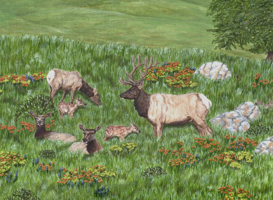 Detail of Tule Elk