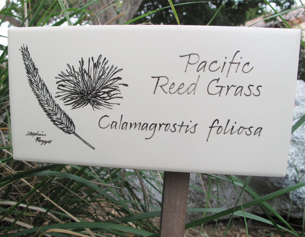 reedgrass-closeup.jpg