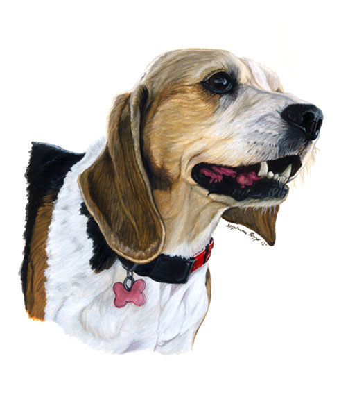 beagle-for-website.jpg