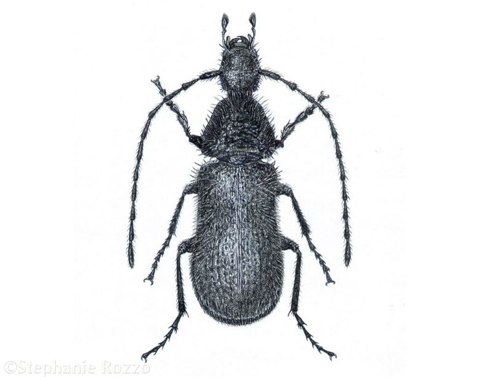 beetle-website.jpg