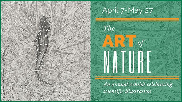 Visit the Santa Cruz Museum of Natural History April 7-May 27 to see a print of my recent Monterey geology illustration and a couple of original botanical field guide illustrations in addition to the work of many other talented natural science illustrators.