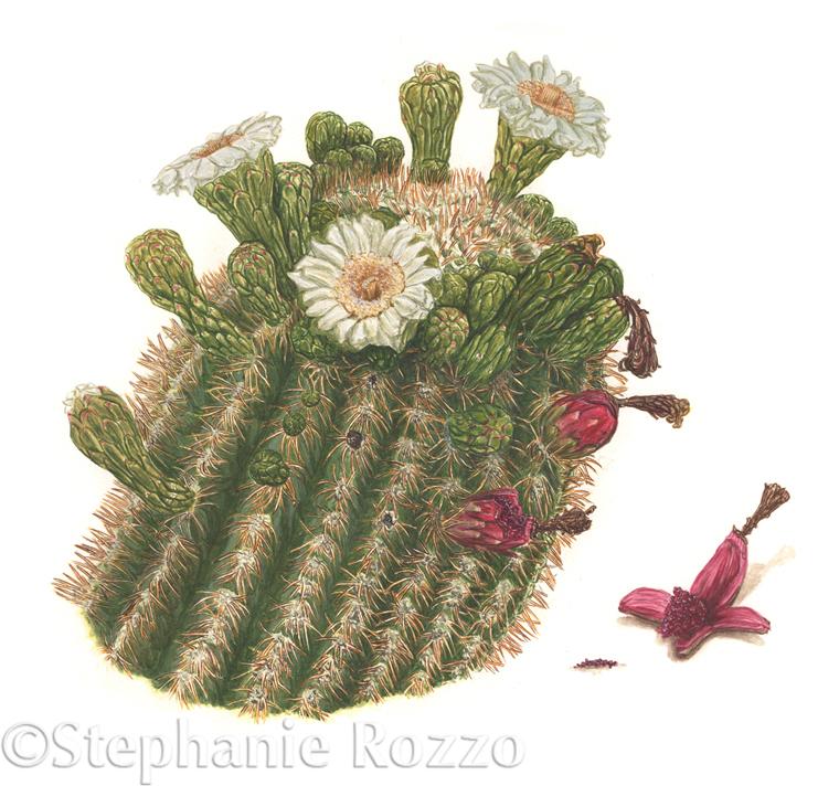 saguaro-cover-images.jpg