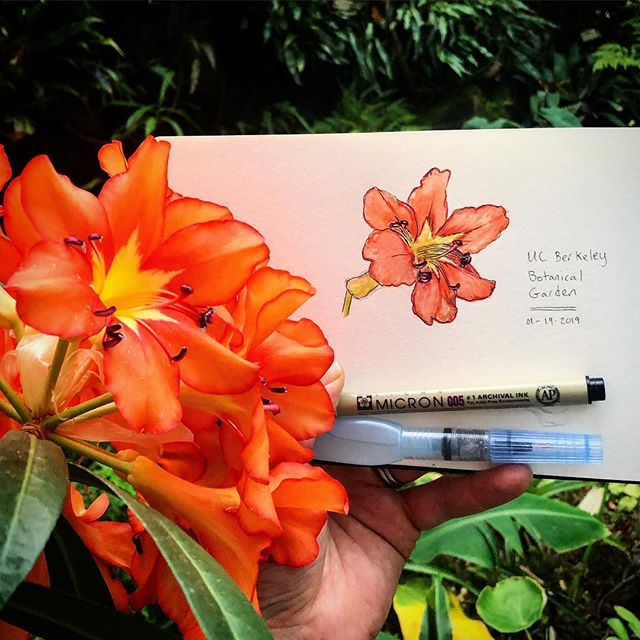 Had a little time before the ethnobotany show opening at the UC Berkeley botanical gardens so I did a little sketch. Forgot to write down what the plant is. Update soon...#weeklywatercolor #botanicalart #sketch