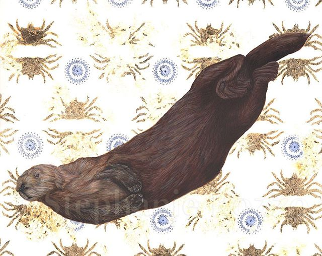 Finished! I started this otter painting a very long time ago and finally made some time to finish it. ---- Southern Sea Otters, Enhydra lutris nereis, are an iconic charismatic species that inspire interest in environmental protection. As a keystone species, the otter's ecosystem largely depends on them. Sea otters eat Sea urchins, which graze on Giant Kelp. They also eat crabs, which reduces predation on snails. The snails graze on algae that would otherwise choke eel grass. #seaotter #keystonespecies #acrylic #scienceillustration