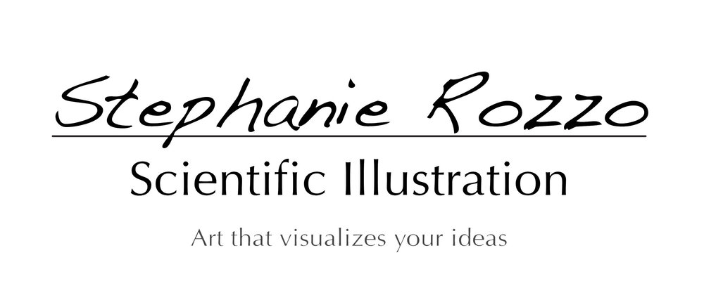 Stephanie Rozzo Scientific Illustration