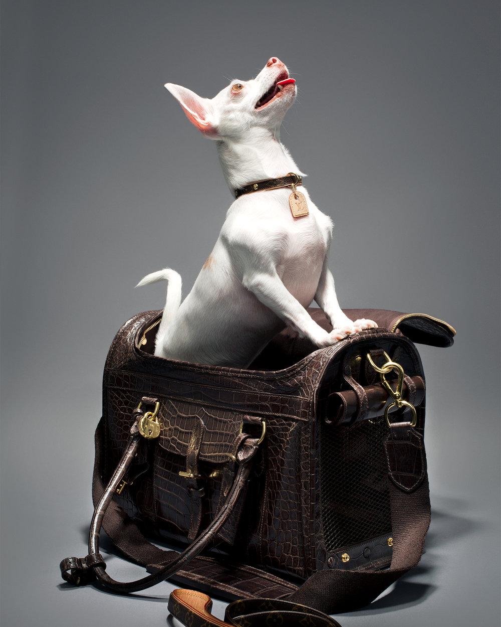 puppy 2 v2.jpg
