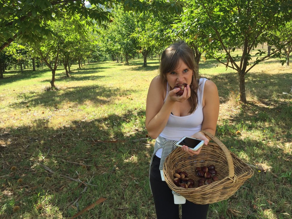 Alana getting competitive while chestnut picking at Wandiful Produce in Wandiligong