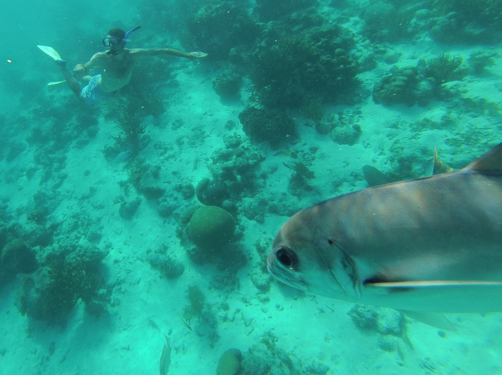 Snorkeling off the coast of Belize