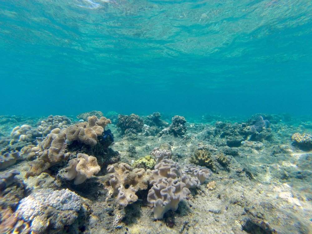 20 photos to convince you to travel to fiji - Snorkeling