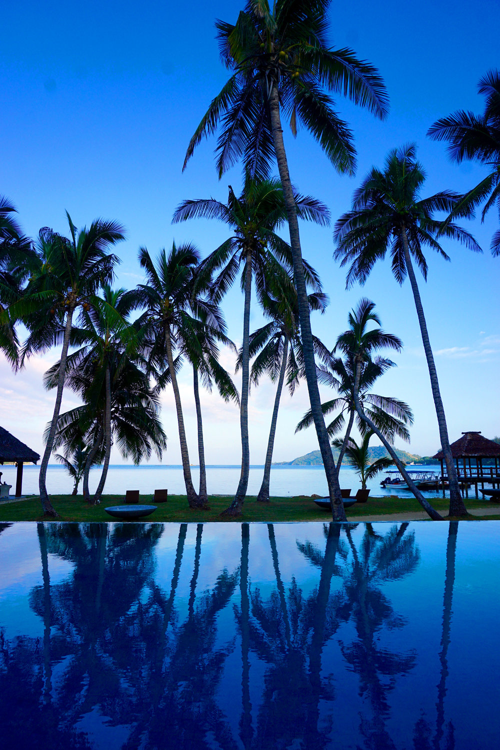 20 photos to convince you to travel to fiji - Palm Tree
