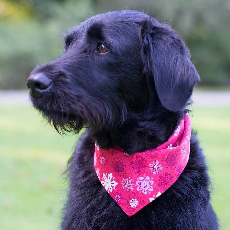 Dog_bandana.jpg