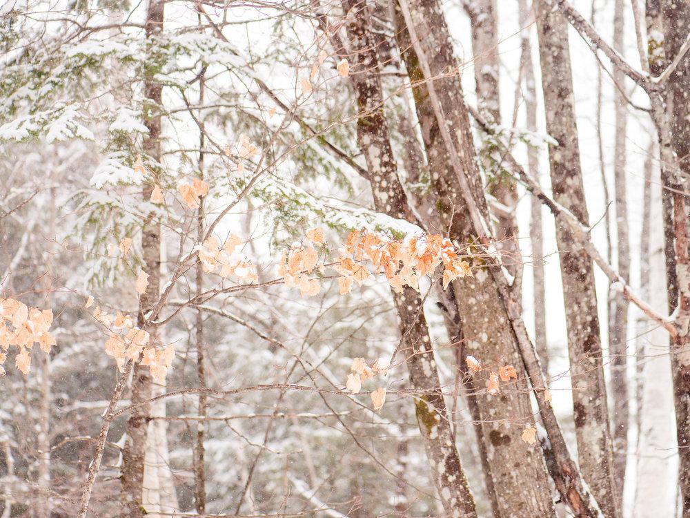 portfranc-hiver-2017-8690.jpg