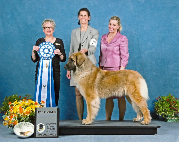 14 months - Best of Winners 2012 Nat'l Specialty