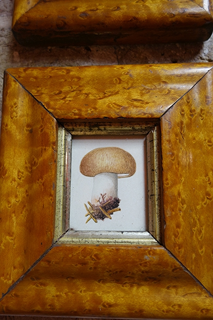 Regency watercolour of a mushroom for sale at Fisher london