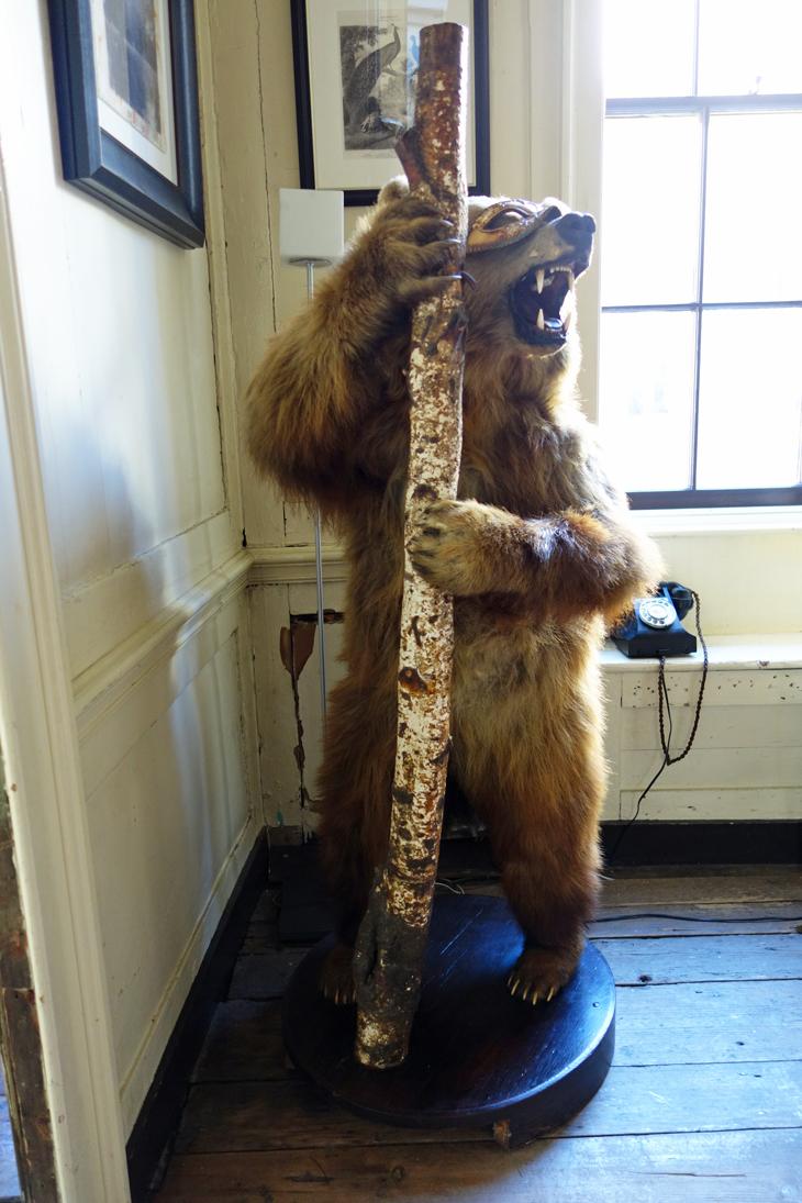 Stuffed bear living in the house of Rupert Hunt