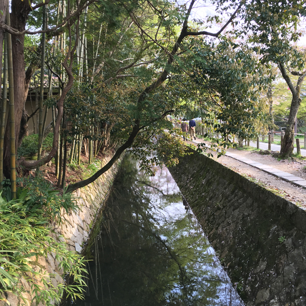 Philosopher's walk Kyoto taken by Isla Simpson