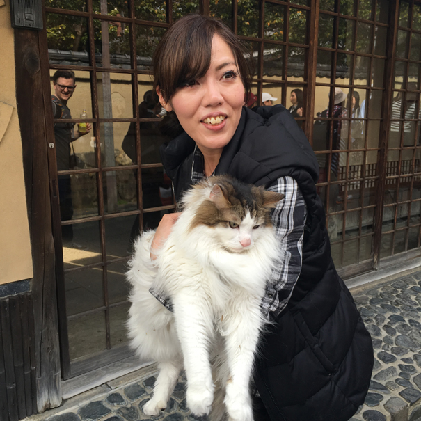 Maine coone cat in kyoto