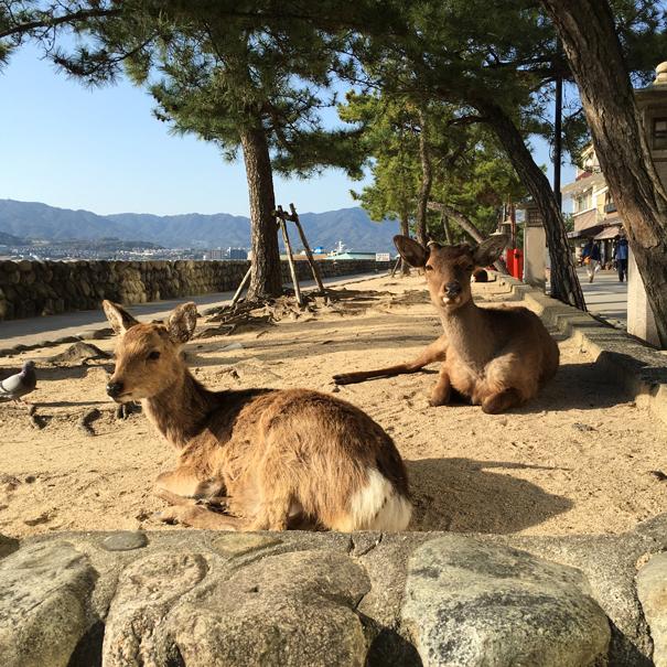 deer at Miyajima Island in japan taken by Isla Simpson