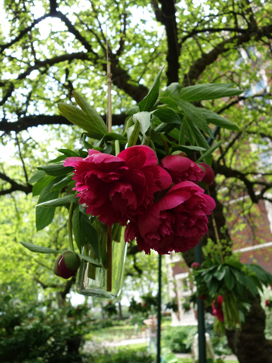 Peony vases in The Inner Temple Garden taken by Isla Simpson