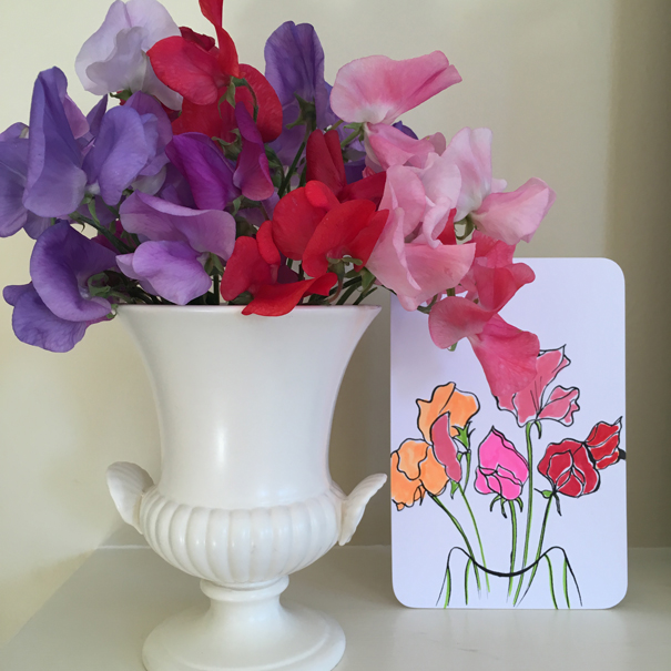sweet peas drawn by Isla Simpson