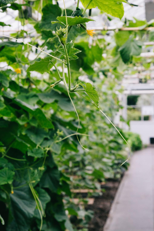 Urban-green-greenhouse-wedding-Ilina-and-james-restaurant-De-Kas-Amsterdam-by-On-a-hazy-morning-84.jpg
