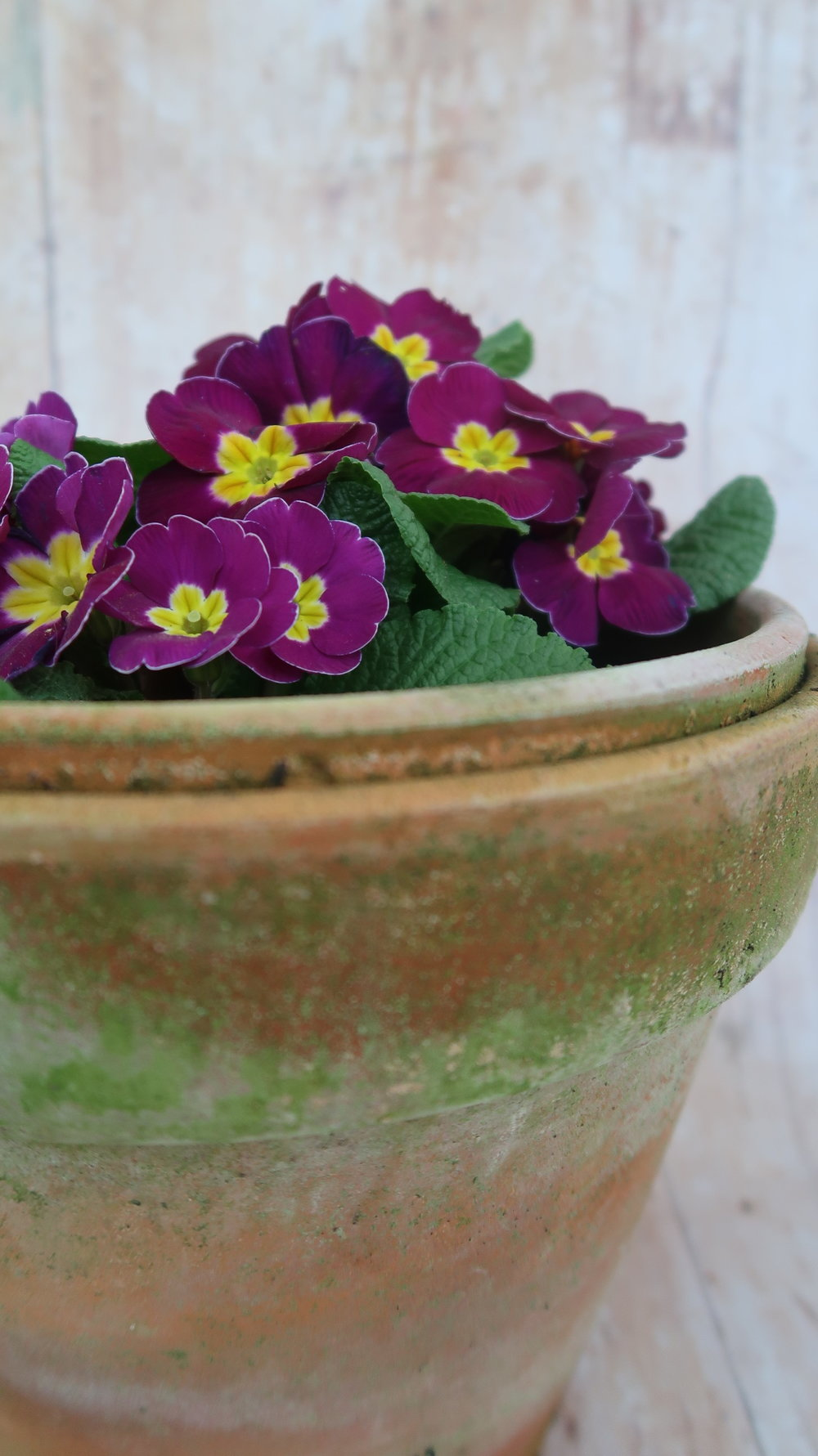 How to make a fairy garden plant pot
