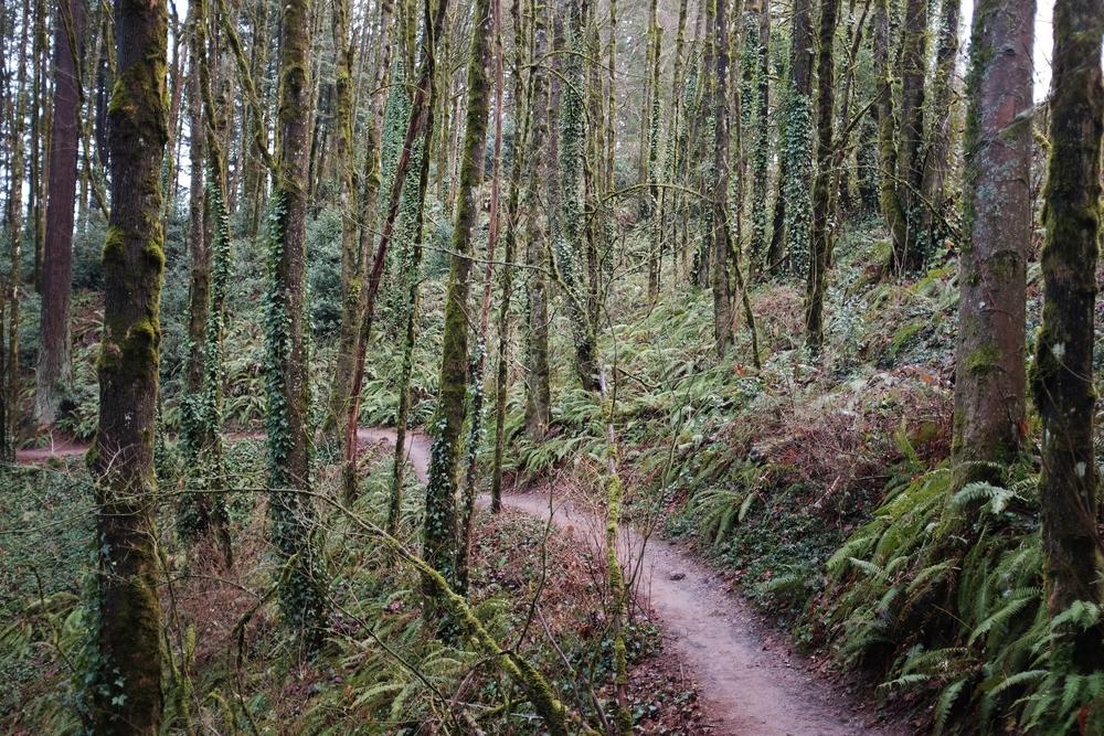 Marquam Nature Park, 4T Trail