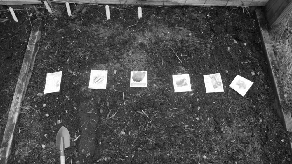 Planting veggies 7.jpg