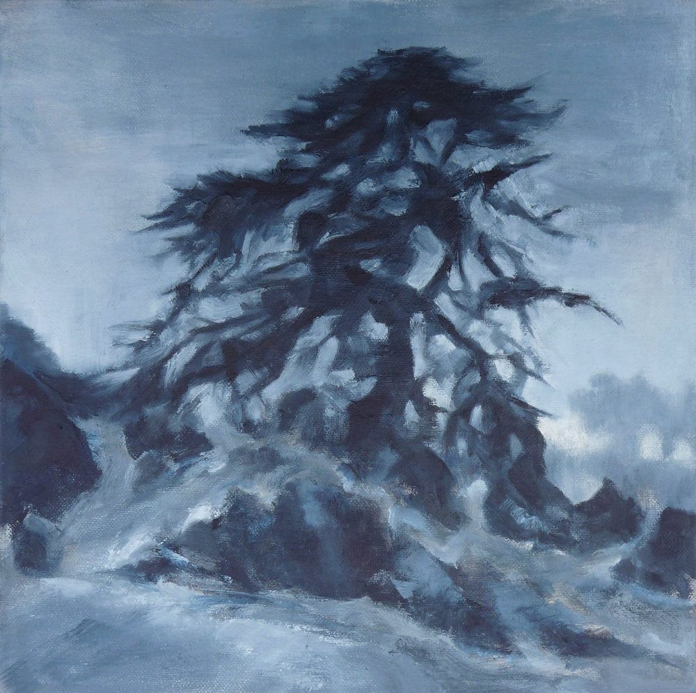 Fort Funston Cypress  , 2016. Oil on canvas. 12 x 12 inches (30.5 x 30.5 cm)