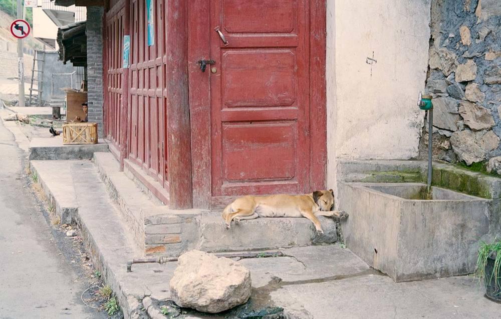 YunnanSleepingDog2.jpg