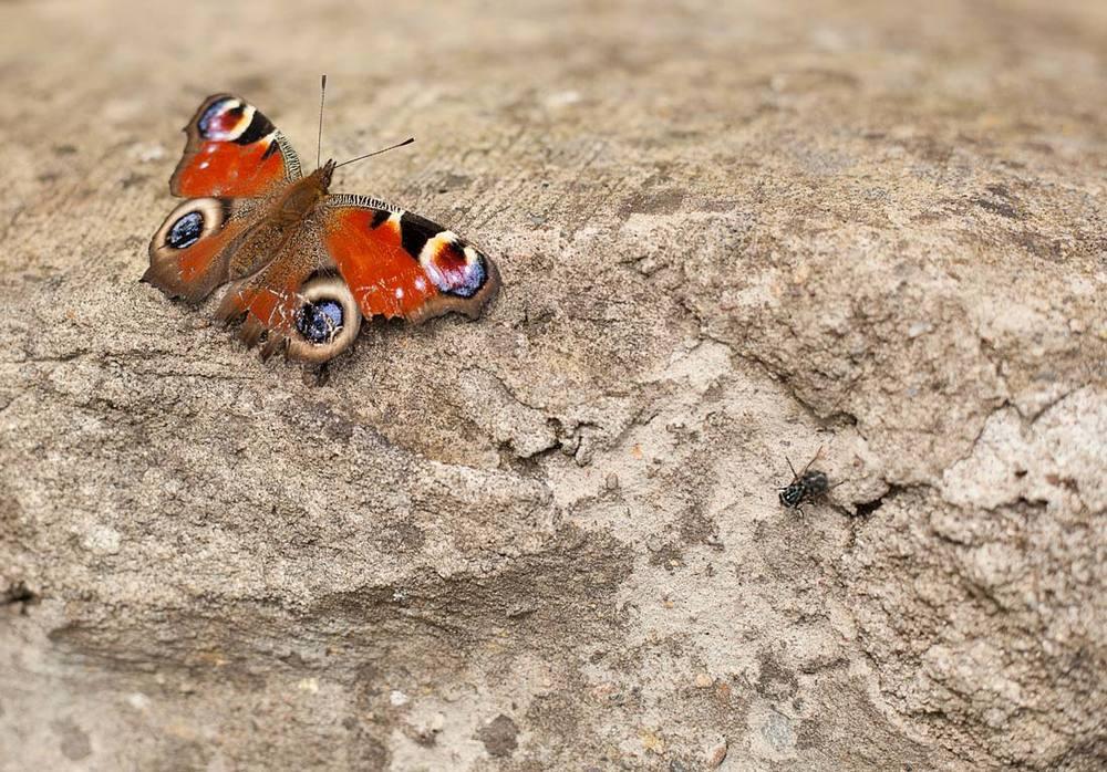 ButterflyAndFly.jpg