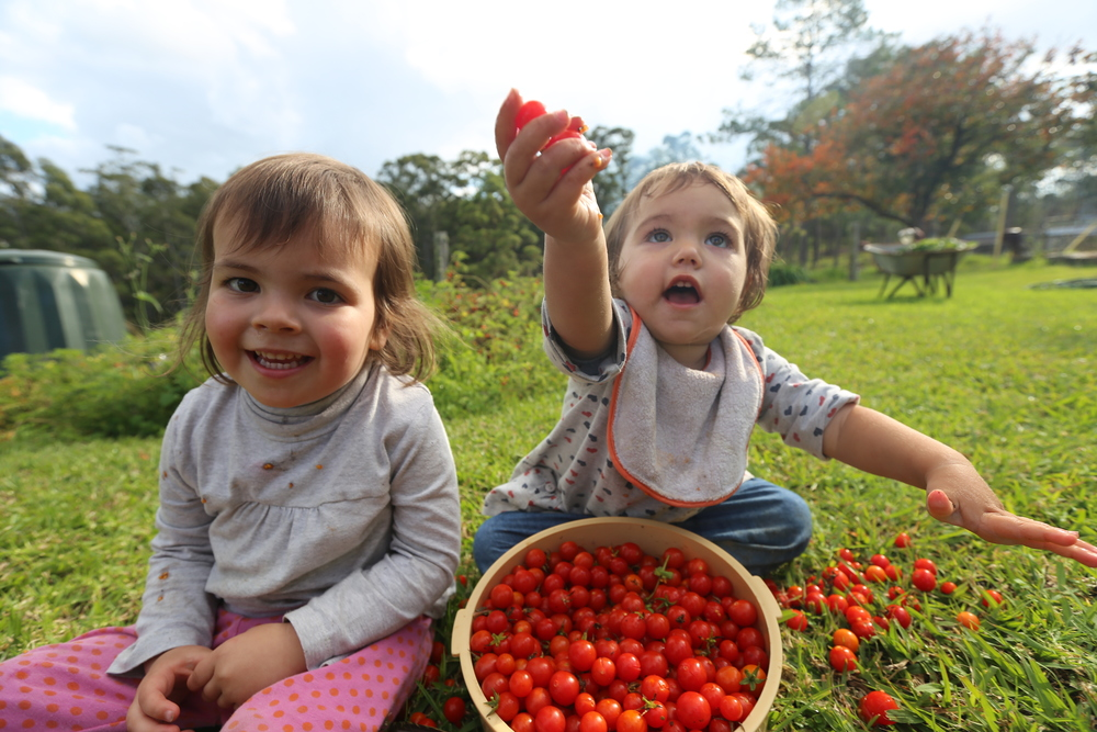 Pick your own dinner from our   Lush Organic Gardens    Book now