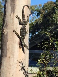 Goanna on Tree.jpg