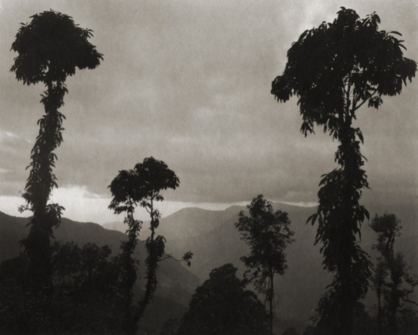 ©Regina DeLuise, Jungle Trees