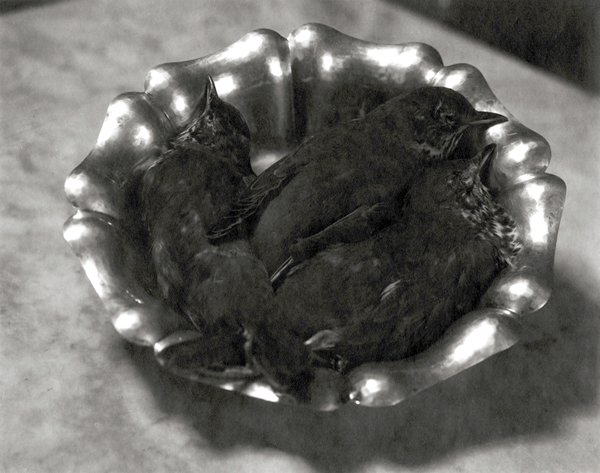 14.Sparrows in Silver Bowl.jpg