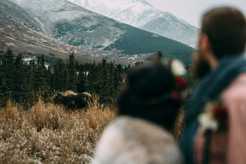 Moose photobombing wedding photo in Alaska