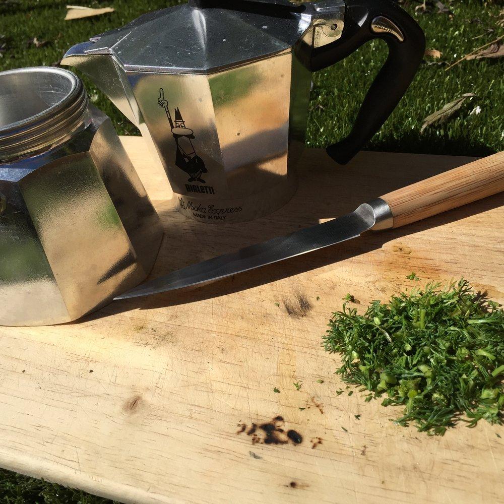 may discweed tea
