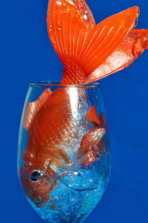 Fish 364-1.jpg