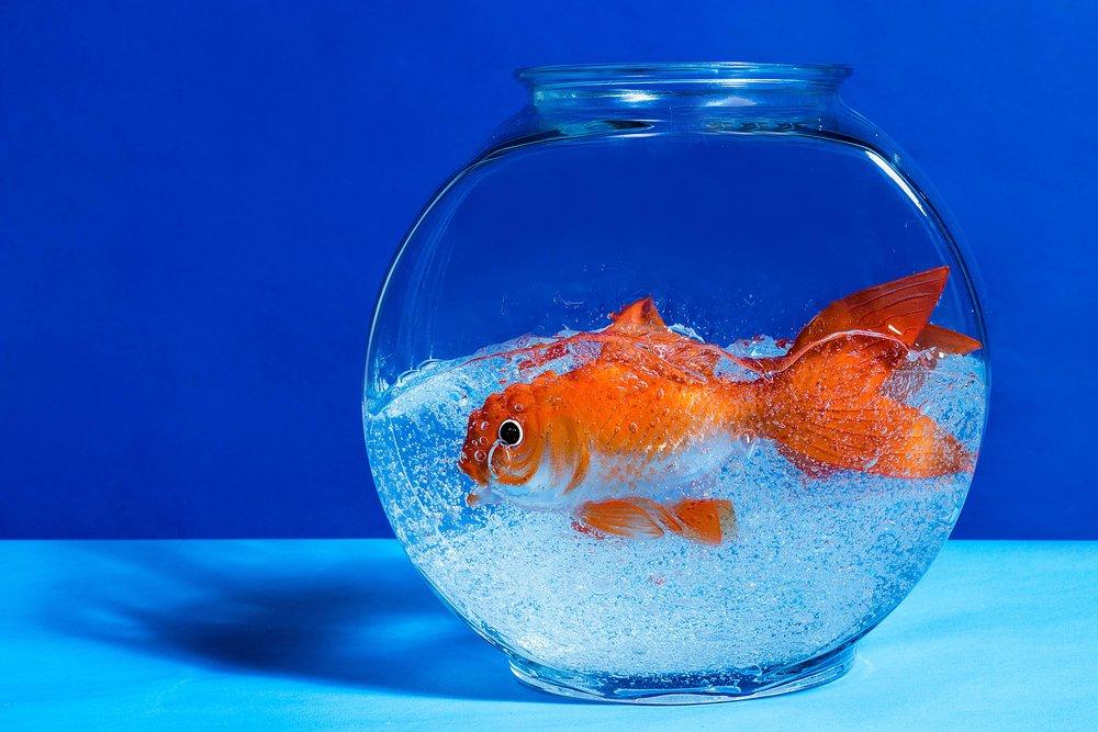 Fish 214-1.jpg