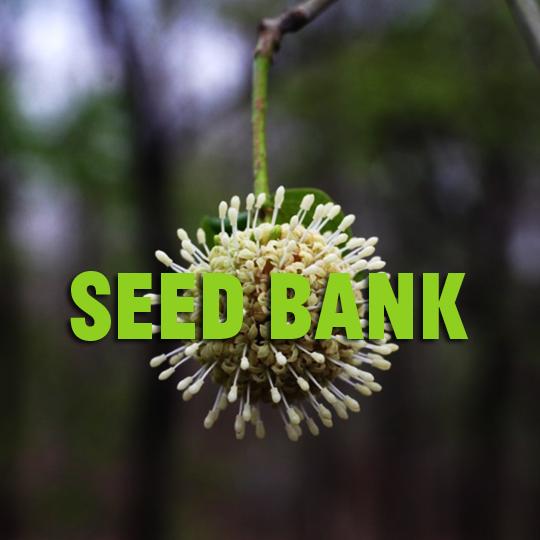delhi seed bank.png