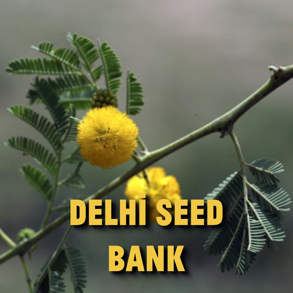 delhiseedbank.png