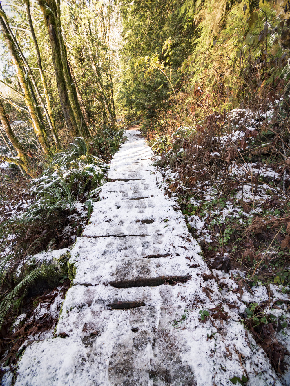 Wood Plank Pathway Covered with Snow on Hiking Trail in Forest