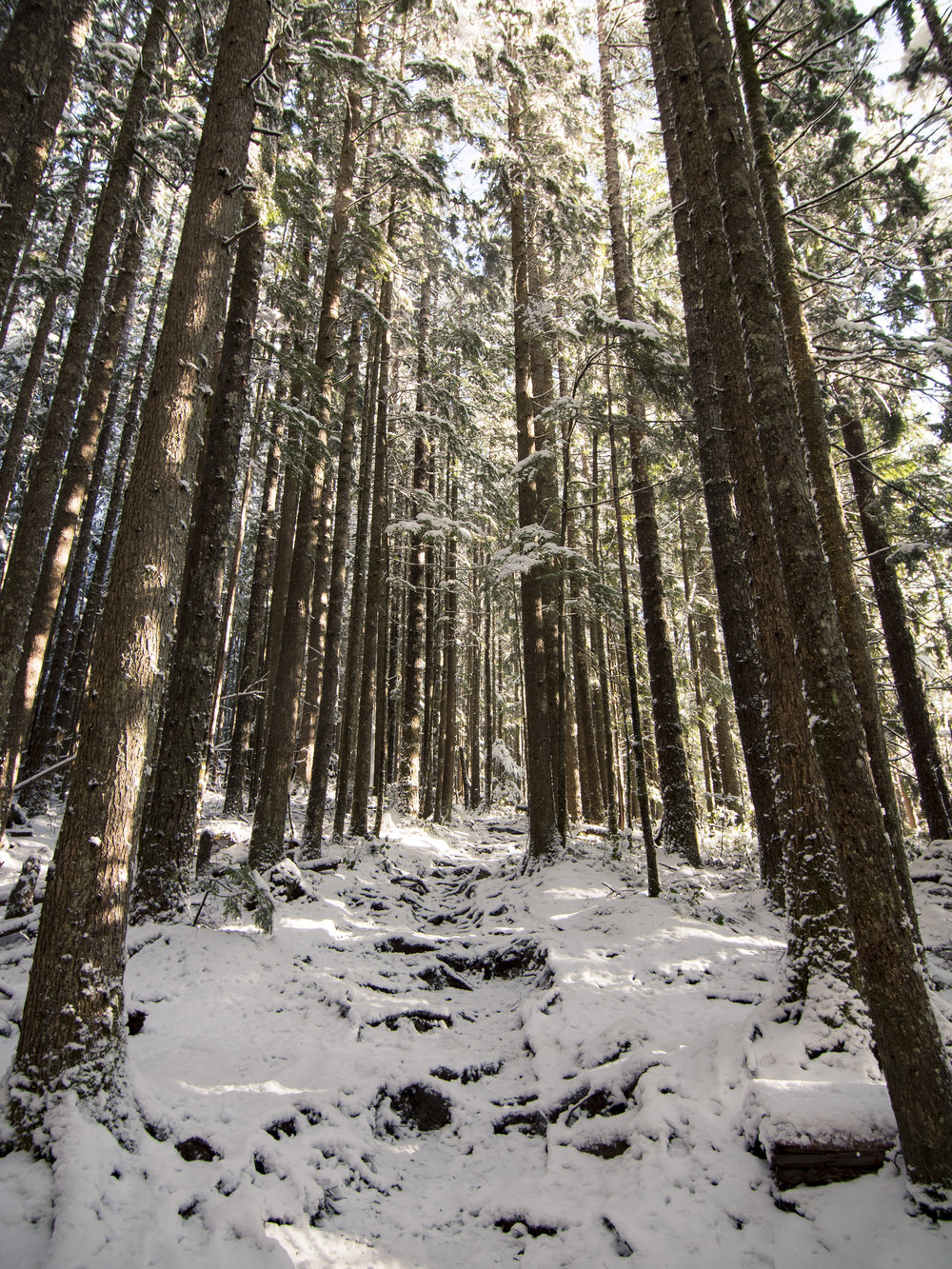 Snowy Hiking Trail Through Trees in Forest