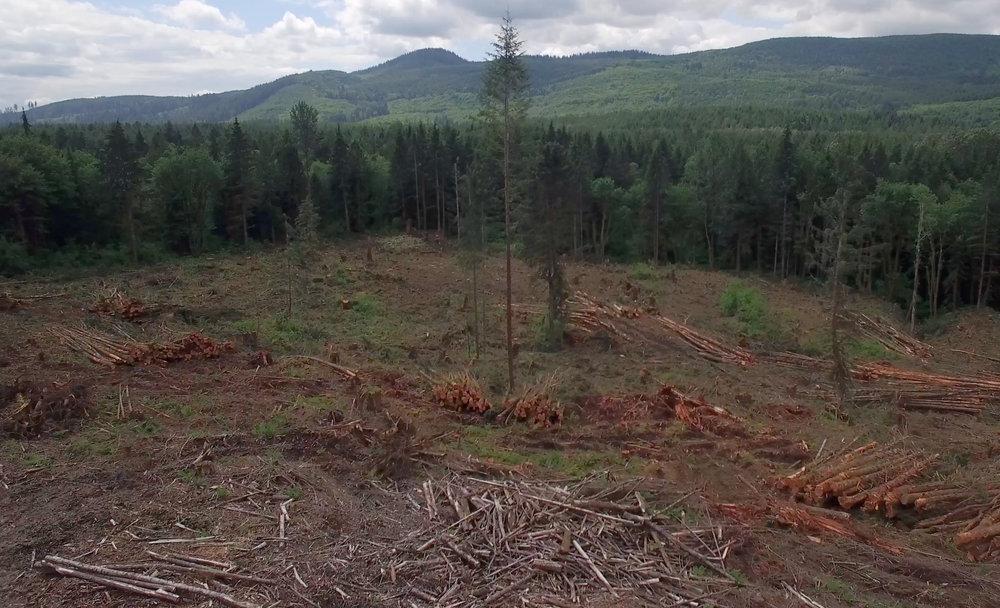 Deforestation_Clear_Cut_Aerial_Blog_05-22-16.jpg