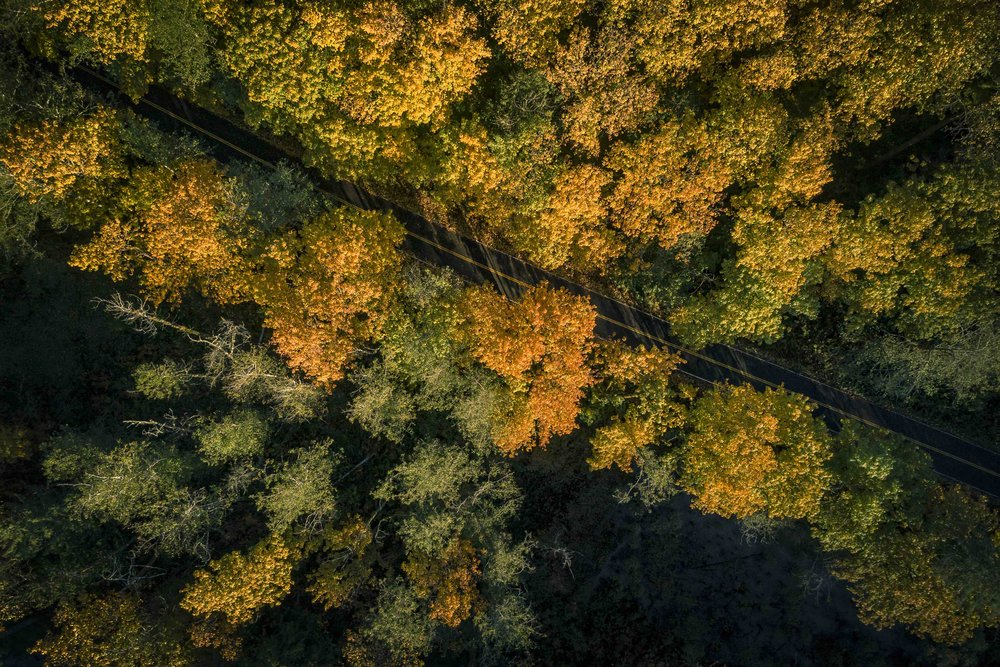 Birds_Eye_View_of_Rural_Road_in_Forest_of_Fall_Season_Colors.jpg