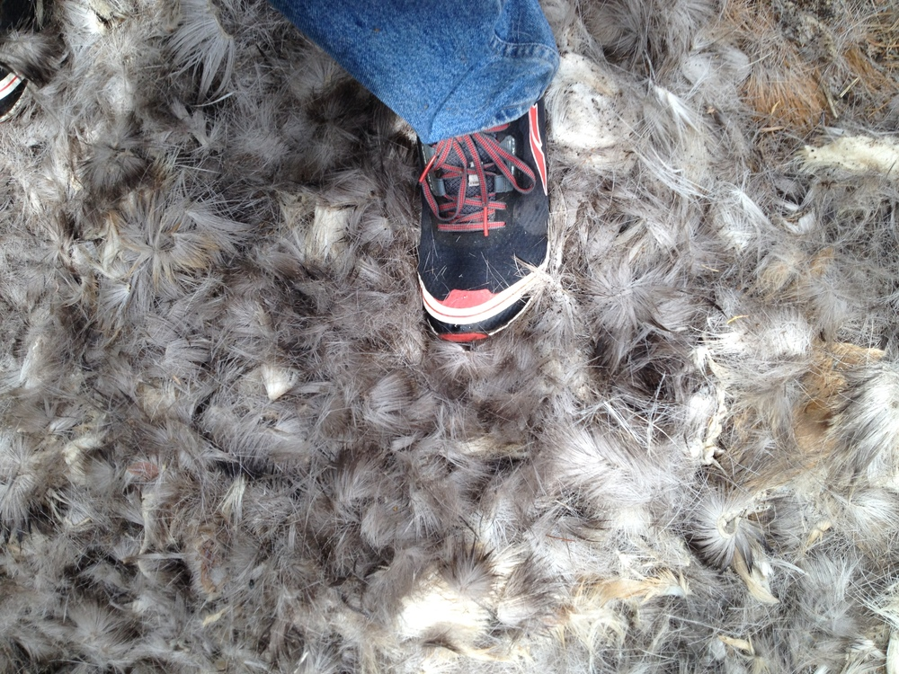 buckskin-deer-hair-pile-shoe.JPG