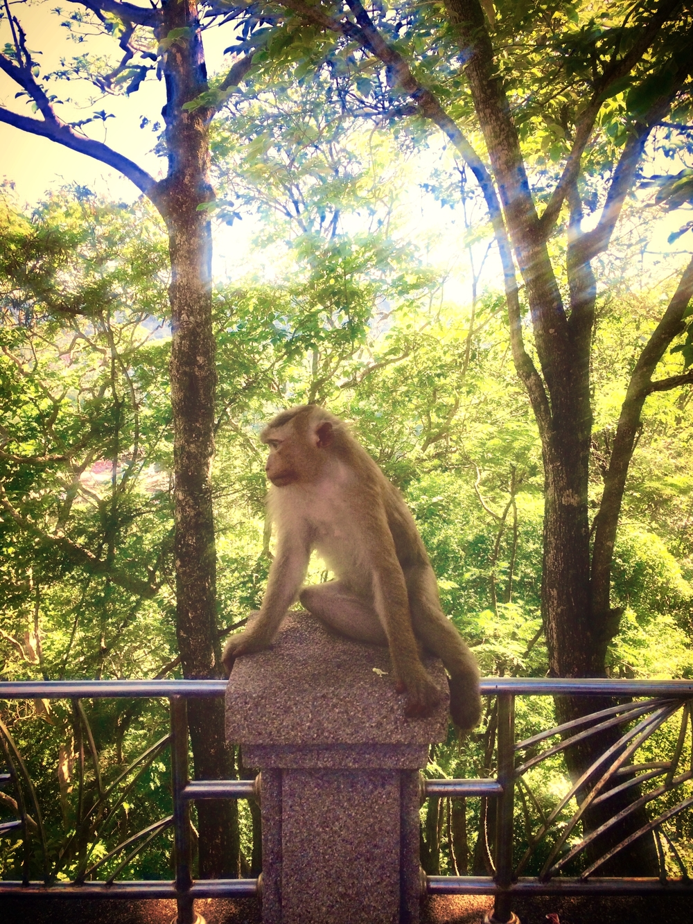 Local monkeys welcome visitors on  Khao Rang Hill.