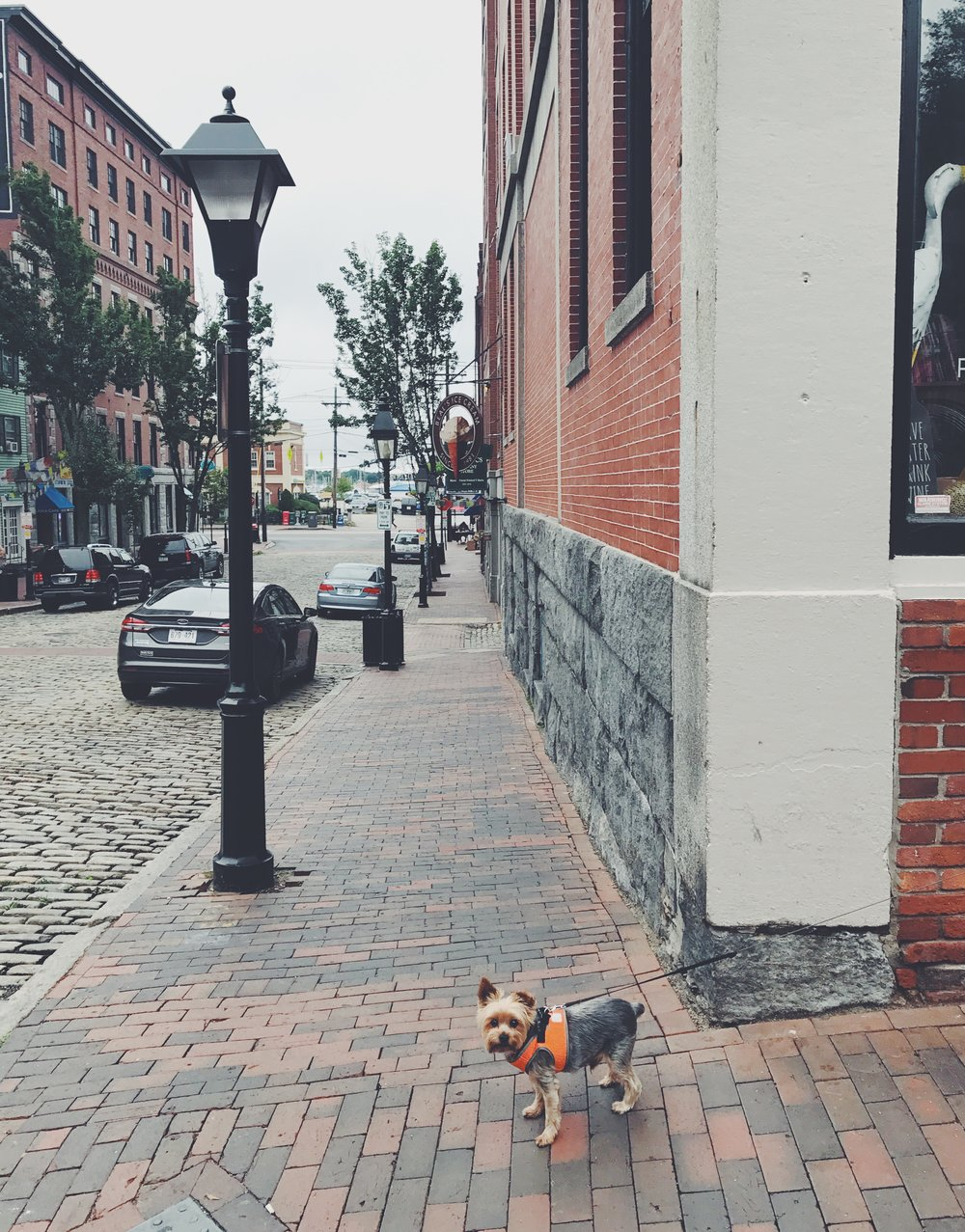 Stanley enjoying his big adventure in Portland, which is extremely dog-friendly!